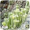 EyweenaPterus's avatar