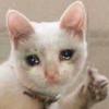 fabueen's avatar