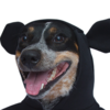 FacundoZanni000's avatar