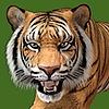 Fae3D's avatar