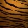 FaeDesires's avatar