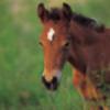 Faeolan-Equus's avatar