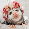 faerieghost's avatar