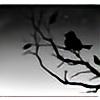 Fallen-Black-Bird's avatar