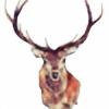famiiine's avatar