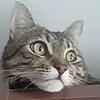 Fanat08's avatar