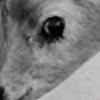fantastikspastik's avatar