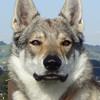 Faolan121's avatar