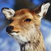 farlilawaldi's avatar