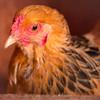 farmlover62's avatar
