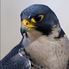 Farukon37's avatar