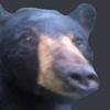 fdes11's avatar