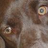 Feay's avatar