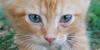 FelineResource's avatar