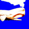 FelixNutsTomcat's avatar