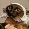 fellfey's avatar