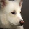 Fernfir's avatar