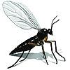 FerociousGnat's avatar