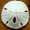 Fihyn's avatar