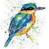 fiona-clarkeART's avatar