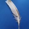 Firebird-feathers's avatar