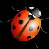 firuzeli's avatar