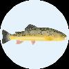 fishfolkart's avatar