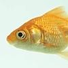 FishLeggiesArt's avatar