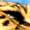 Flavius-C's avatar