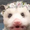 fleetopossum's avatar
