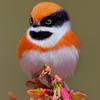 Fliederkuchen's avatar