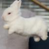 floatyghosty's avatar
