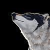 Floshee's avatar