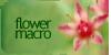 Flower-Macro's avatar
