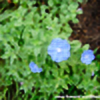 floweret2010's avatar