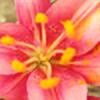FlowerLoveClub's avatar