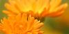 flowers-plantsLover's avatar