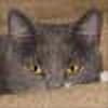 flowersdaughter's avatar
