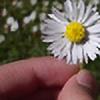 flowersong's avatar