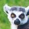 flufflestehleemerman's avatar