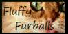 Fluffy-Furballs