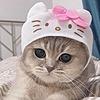 Fluffy-shibe's avatar