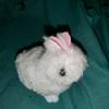 FluffyTheBunny1's avatar