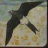 Fly4high's avatar