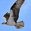Flyin-low's avatar
