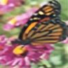 flyingflwer's avatar