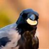 Flytografie's avatar