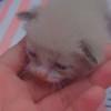 FNAFSofia03's avatar