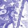folcs's avatar