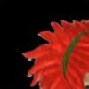followingotherusers's avatar